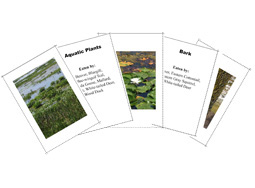 Wildlife Habitat Evaluation Food Flash Cards