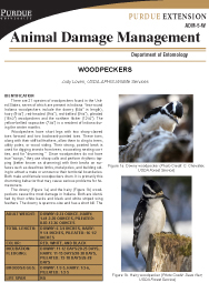 Animal Damage Management: Woodpeckers