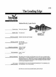 Yellow Perch, Lake Perch
