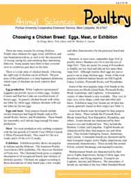 Choosing a Chicken Breed: Eggs, Meat, or Exhibition