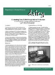 Evaluating Dairy Cattle Using Lifetime Production