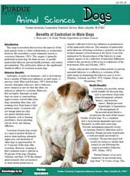 Benefits of Castration in Male Dogs
