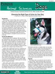 Choosing the Right Type of Collar for Your Dog