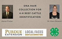 DNA Hair Collection for 4-H Beef Cattle Identification