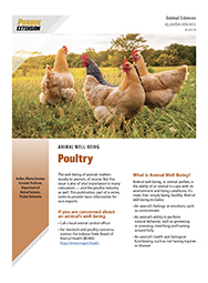 Animal Well Being:  Poultry