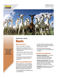 Animal Well-Being: Goats