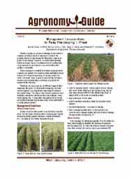 Management Considerations for Relay Intercropping: I. Wheat