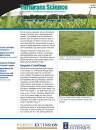 Animal Urine Damage in Turf