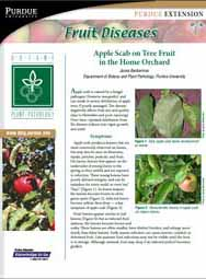 Fruit Diseases: Apple Scab on Tree Fruit in the Home Orchard