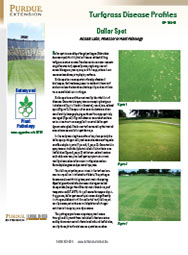 Turfgrass Disease Profiles: Dollar Spot