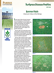 Turfgrass Disease Profiles: Summer Patch