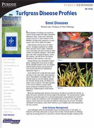 Turfgrass Disease Profiles: Smut Diseases