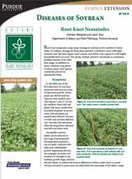Diseases of Soybean: Root Knot Nematode