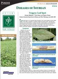 Diseases of Soybean: Frogeye Leaf Spot