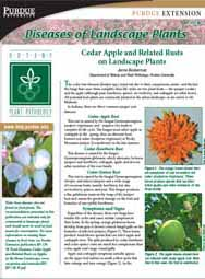 Diseases of Landscape Plants: Cedar Apple and Related Rusts on Landscape Plants