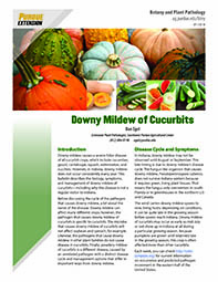 Vegetable Diseases: Downy Mildew of Pumpkin