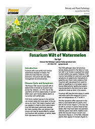 Vegetable Diseases: Fusarium Wilt of Watermelon