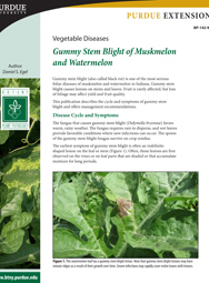 Vegetable Diseases: Gummy Stem Blight of Muskmelon and Watermelon