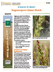 Diseases of Wheat: Stagonospora Glume Blotch