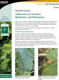 Vegetable Diseases: Anthracnose of Cucumber, Muskmelon, and Watermelon
