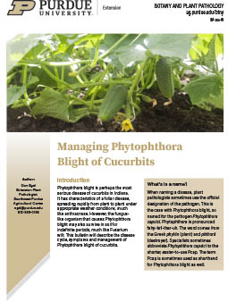 Phytophthora Blight of Cucurbits