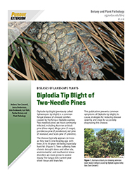 Diplodia Tip Blight of Two-Needle Pines