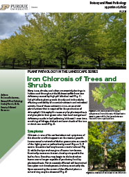 Iron Chlorosis of Trees and Shrubs