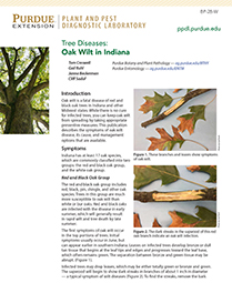 Tree Diseases: Oak Wilt in Indiana