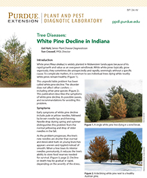 Tree Diseases: White Pine Decline in Indiana