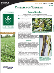 Diseases of Soybean: Brown Stem Rot