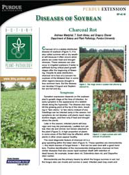 Diseases of Soybean: Charcoal Rot
