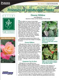 Diseases of Landscape Plants: Downy Mildew