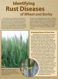 Identifying Rust Diseases of Wheat and Barley