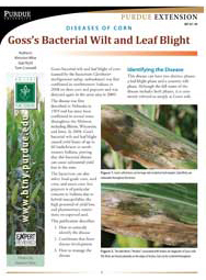 Diseases of Corn: Goss's Bacterial Wilt and Leaf Blight