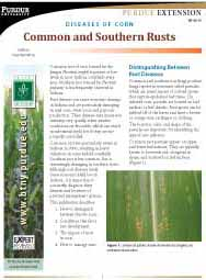 Diseases of Corn: Common and Southern Rust