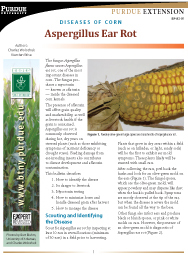 Diseases of Corn: Aspergillus Ear Rot