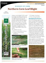 Diseases of Corn: Northern Corn Leaf Blight