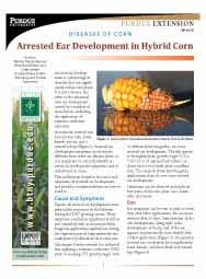 Diseases of Corn: Arrested Ear Development in Hybrid Corn