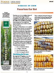 Diseases of Corn: Fusarium Ear Rot