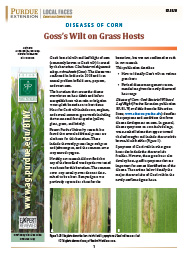 Diseases of Corn: Goss's Wilt on Grass Hosts