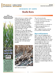 Diseases of Corn: Stalk Rots