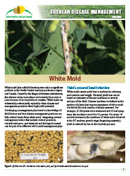 Soybean Disease Management: White Mold