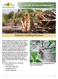 Soybean Disease Management: Soybean Seedling Diseases