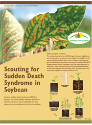 Scouting for Sudden Death Syndrome in Soybean