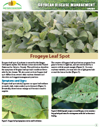 Soybean Disease Management: Frogeye Leaf Spot