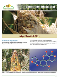 Corn Disease Management: Mycotoxin FAQs