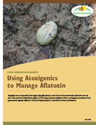 Corn Disease Management: Using Atoxigenics to Manage Aflatoxin