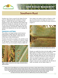 Corn Disease Management: Southern Rust