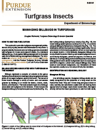 Turfgrass Insects: Managing Billbugs in Turfgrass