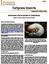 Turfgrass Insects: Managing White Grubs in Turfgrass